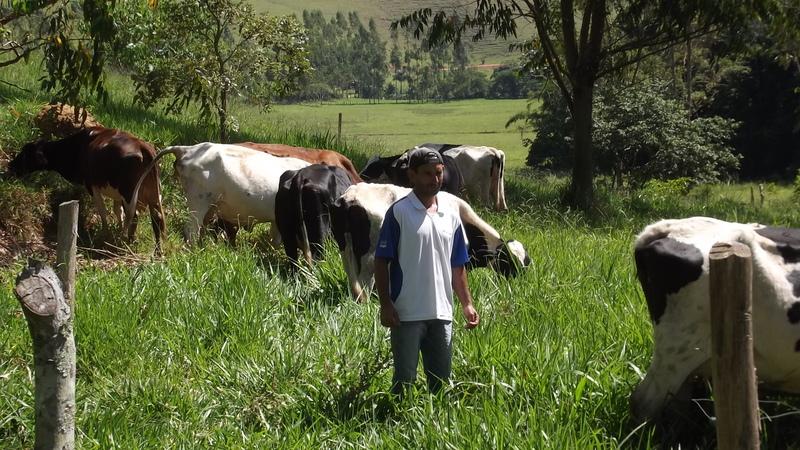 Emater-MG ajuda produtor aumentar renda com ganho na a produtividade do leite